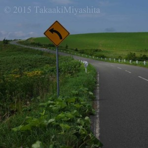 cropped-豊富町-牛横断注意4.jpg